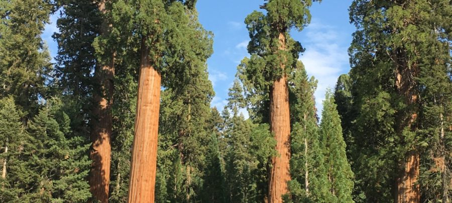 Manage stress in diabetes - tall trees